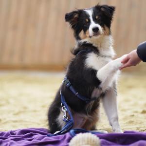 Newsletter der Hundeschule MATA