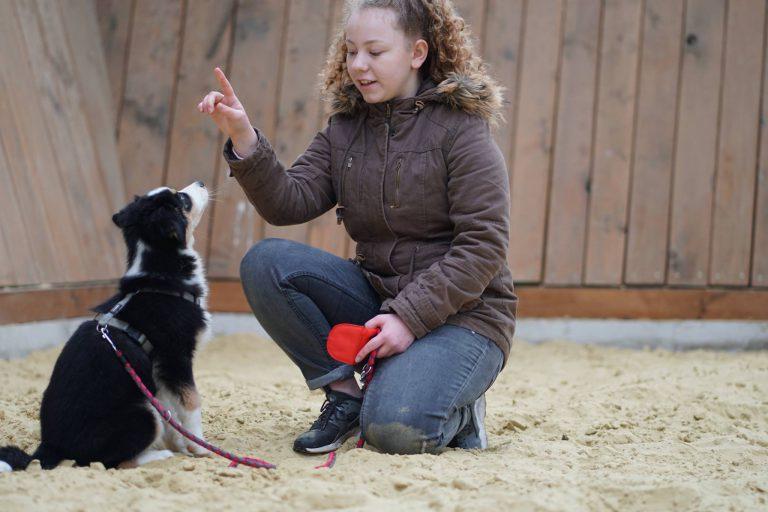 Welpenstunde in der Hundeschule MATA