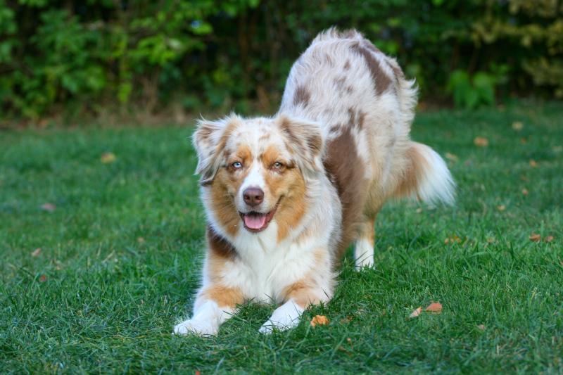 Trick-Kurs in der Hundeschule MATA
