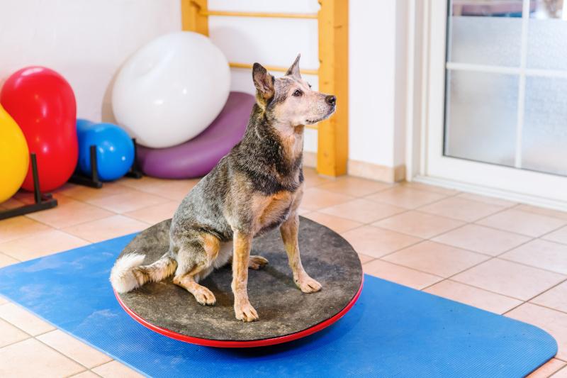 Übungen aus der Physiotherapie für Hunde