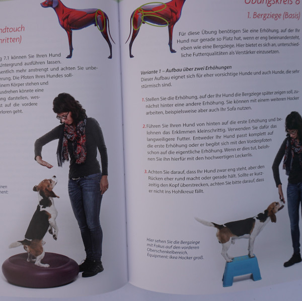 Praxisbuch-Hundefitness-Einblick-3