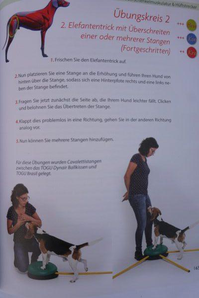 Praxisbuch-Hundefitness-Einblick