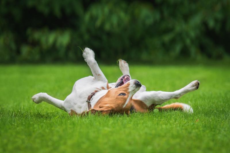 Glücklicher und zufriedener Hund