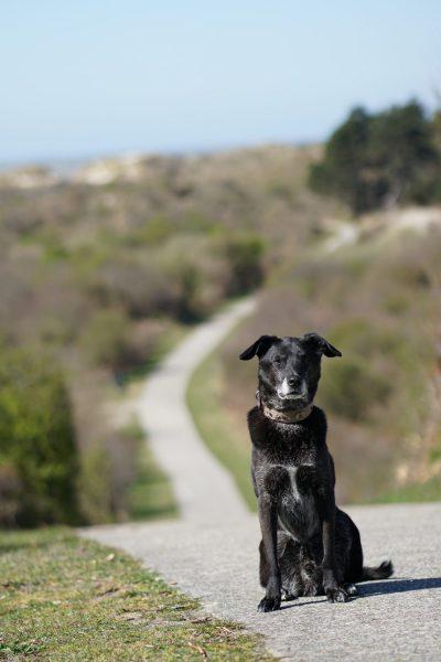 Aktuelles bei Hundeschule MATA