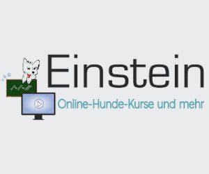 Online-Hunde-Kurse